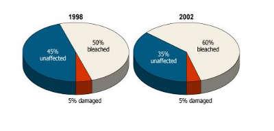 blanchiment corail 1998-2002