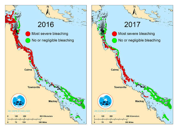corail blanchiment 2017